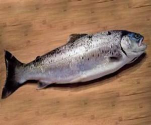 Ülkemizdeki Tatlısu Balıkları