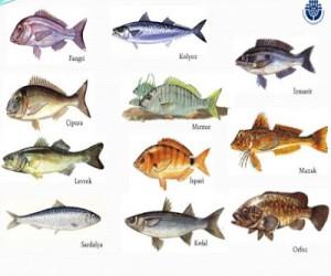 Mevsimlerine Göre Avlanan Balıklar
